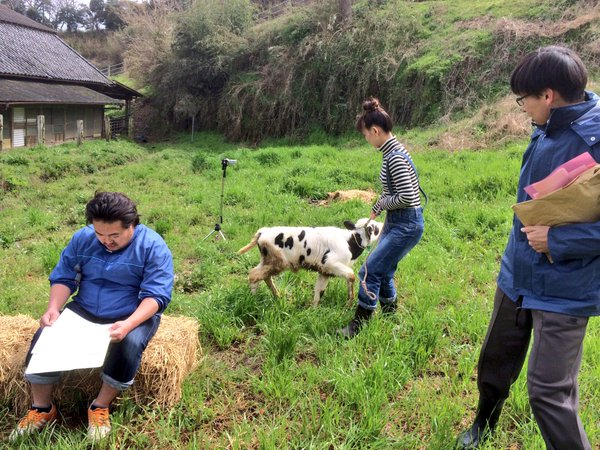 去年の稽古風景。役者は酪農家でない者がほとんどなので、牛に慣れることから始まった。